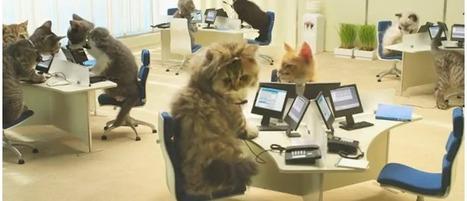 Pub Bouygues Télécom : le buzz avec des chatons | Actualité web 2.0 : buzz et geekerie | Scoop.it