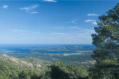 A Tigliola - Ospedale - Corsica   Alles over Corsica   Scoop.it
