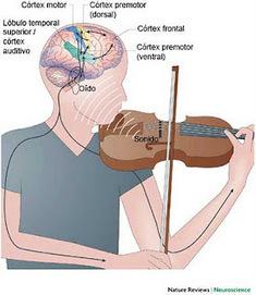 CEREBRO ADOLESCENTE: El estudio y práctica de la música puede modificar el cerebro | Música en el aula | Scoop.it