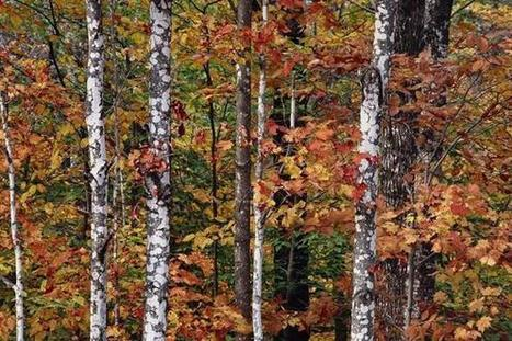 Appreciating Thoreau on the sesquicentennial of 'The Maine Woods' - Boston Globe | Global Solo Travel Trends | Scoop.it