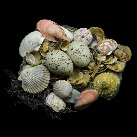 15 Incredible Photographs of Birds' Nests | Everything Photographic | Scoop.it
