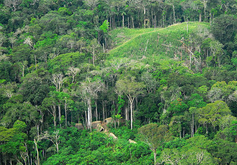 Plateau des Guyanes, le second poumon de la pla... | biological diversity | Scoop.it