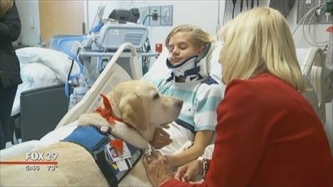 Therapy Animals Provide A Different Kind Of Medicine - MyFox Philadelphia | Dog behavior | Scoop.it
