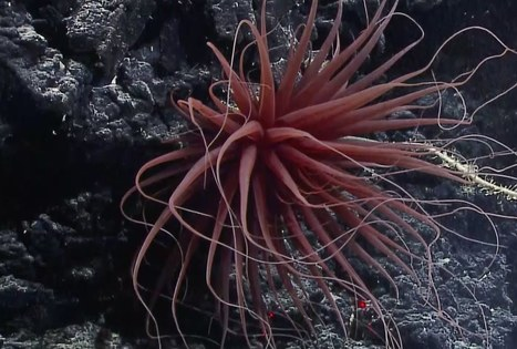 Likable Science with Ethan Allen – Discovering the Deep Sea with NOAA | ❀ hawaiibuzz ❀ | Scoop.it