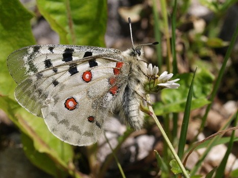 Qu'est-ce qu'une liste rouge ? | EntomoScience | Scoop.it