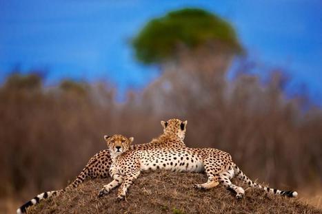 Twitter / IrinaGreenVoice: #Wildlife picture of the day: ... | Wildlife | Scoop.it