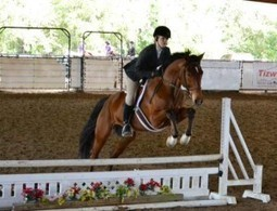 Reggie's Third Show - Dust Yourself Off and Try Again, presented by Five Star Tack | From the Equine Blogosphere | Scoop.it