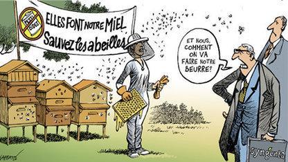 petition - Monsieur le Ministre Stéphane Le Foll: Protégeons la pollinisation, interdisons les pesticides néonicotinoïdes | Miel Melipona | Scoop.it