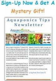 Aquaponics Fish | Aquaponics | Scoop.it