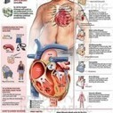 Prevention is the Key to Cope with Heart Diseases | Prevent or minimize the risks of illness | Scoop.it