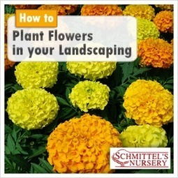 6 Steps To Planting Flowers in Your Landscaping | Growing Gardens | Scoop.it