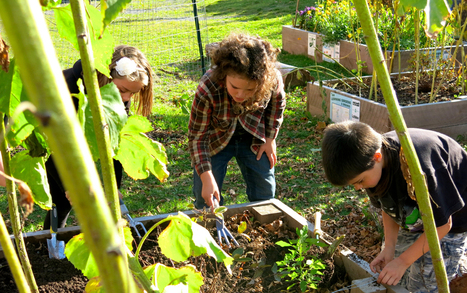 Innovative ideas for school gardens | School Gardening Resources | Scoop.it
