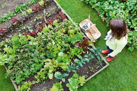 DIY Guide: How to Build a Raised Vegetable Garden | Plant Gurus | Gardening | Scoop.it