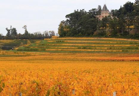 Why you should go for the Bordeaux that aren't collector's items | Planet Bordeaux - The Heart & Soul of Bordeaux | Scoop.it
