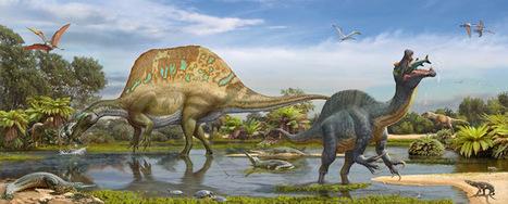 Lusodinos- Dinossauros de Portugal: Espinossauros de Marrocos: estudo confirma a existência de duas espécies | Milhares de milhões de anos... a mesma Terra ! | Scoop.it