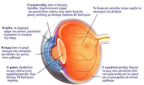 eye.jpg (580×345) | ΣΤ ΤΑΞΗ, 12ου ΔΗΜΟΤΙΚΟΥ ΣΧΟΛΕΙΟΥ ΑΓΙΟΥ ΔΗΜΗΤΡΙΟΥ, 2013-2014 | Scoop.it