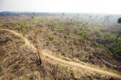 Deforestation in Brazil's Amazon 'surges 450%' | Sustain Our Earth | Scoop.it