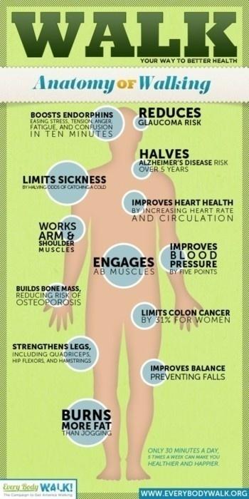 Infographic: The anatomy of walking | Everyday School Health | Scoop.it