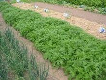 Formation : 2 et 3 décembre 2013, GESTION DE LA FERTILITÉ DES SOLS EN MARAÎCHAGE BIO (  Alpes-Maritimes  ) | Chimie verte et agroécologie | Scoop.it