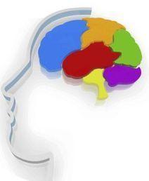 Neurománager, el perfil del directivo que viene   social learning   Scoop.it