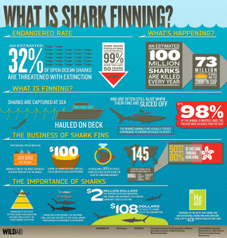 What is Shark Finning? - Infographic | Water affairs | Scoop.it