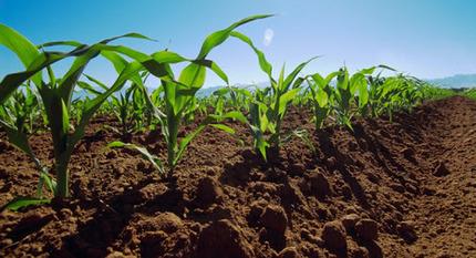 ¿Porque contribuyen las prácticas de manejo de suelos orgánicos a una mejor… | Permacultura, Agricultura Organica, Huertos Urbanos, Horticultura, bosques de alimentos y otros BIO | Scoop.it