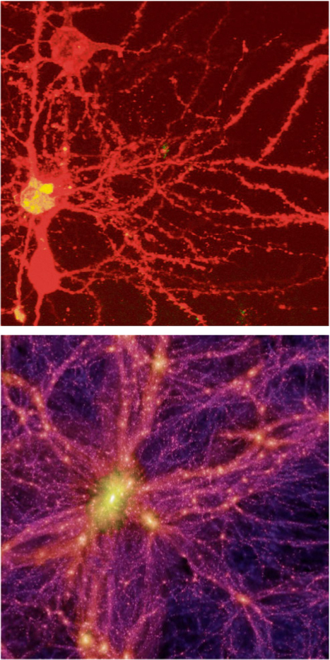 Our Brain's Neurons Look Exactly Like The Structure Of The Universe | Disinformation | Cognitive Science | Scoop.it