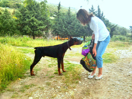 The Doberman dumped between two tunnels | Rescue Showcase - The Great Animal Rescue Chase | Nature Animals humankind | Scoop.it