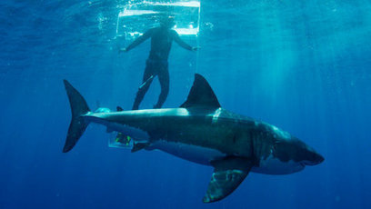 Shark Week Gets Real | All about water, the oceans, environmental issues | Scoop.it