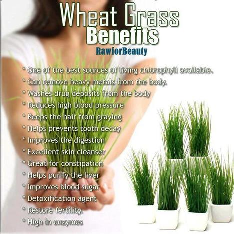Wheat Grass | LOCAL HEALTH TRADITIONS | Scoop.it