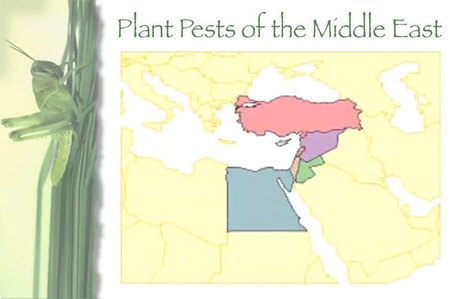 Plant Pests of the Middle East : huji.ac.il | crop pests and diseases | Scoop.it
