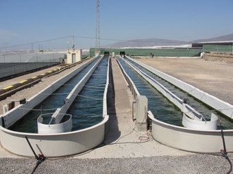 First algae harvest at wastewater biofuel All-gas project in Spain | Aquaponics Fish Farming by Youmanitas | Scoop.it