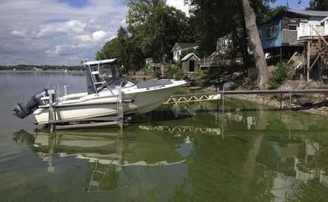 Schumer calls on feds to combat algae blooms | Canoeing & Kayaking | Scoop.it