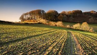 Rothamsted mention: BBC Radio 4 - Farming Today, HS2 and Wildlife, Aphid Catching, Why Grass Matters | BIOSCIENCE NEWS | Scoop.it