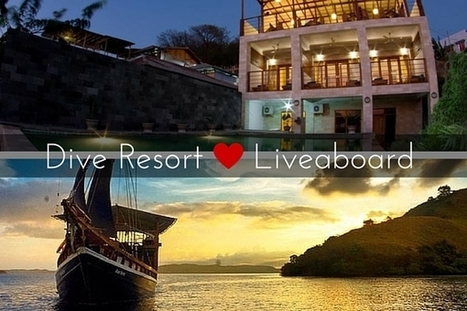 Dive Resort or Liveaboard What Should You Choose and Why? | Bookyourdive | Scoop.it