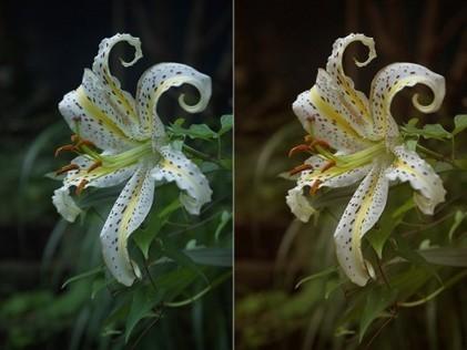 Understanding White Balance | Photography Tips & Ideas | Scoop.it