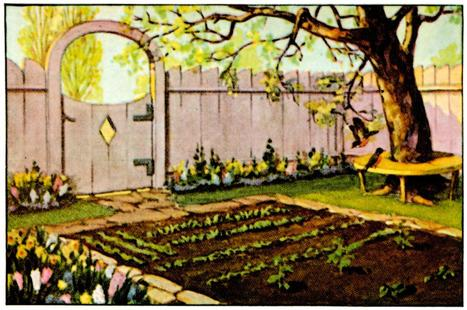 Ten Steps to a Successful Garden - Illinois Vegetable Garden Guide | School Gardening Resources | Scoop.it