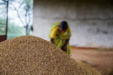 Producing more food using less land: how can science help? / CGIAR | A Better Food System | Scoop.it