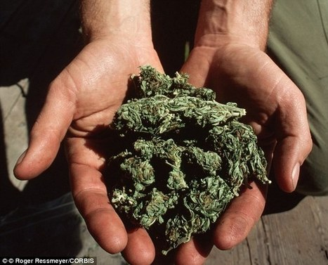 Time to legalise cannabis in India | Can Cure - Sure | Scoop.it