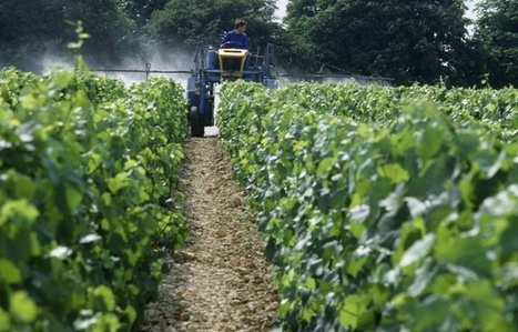 #Aquitaine: Que fait la #filière #viticole pour réduire son utilisation de #pesticides? | RSE et Développement Durable | Scoop.it