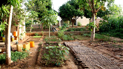 Au Mali, plusieurs milliers d'agriculteurs convertis à l'agro-écologie | Innovation territoriale, développement durable et projets d'avenir | Scoop.it