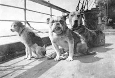 Remembering The Dogs of The Titanic | Interesting & Odd Pet Topics | Scoop.it