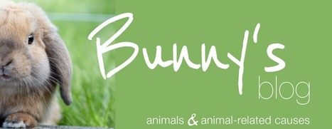Bunny's Blog: A new life for Chance | Pet News | Scoop.it