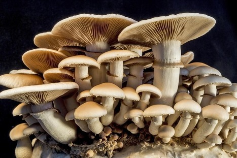 How Mushrooms Can Save the World | DiscoverMagazine.com | The Eclectic Researcher | Scoop.it