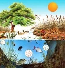 Perspectivas para el estudio de la ecología | Recursos educativos - Otras materias | Scoop.it