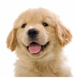 Mobile Vet Mississauga Suggests Tips to Keep Your Canine Happy and Healthy | Mobile Vet Service provides complete range of Veterinarian services at-home | Scoop.it