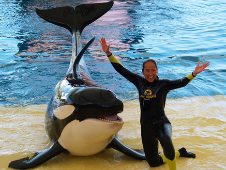 Blood in the Water | Animals in captivity - Zoo, circus, marine park, etc.. | Scoop.it
