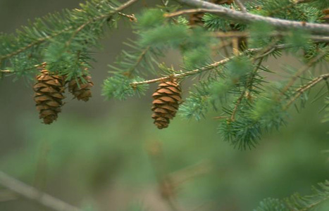 Water Now to Help Prevent Winter Burn to Evergreen Trees and Shrubs | The Miracle of Fall | Scoop.it