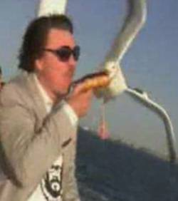 Il se fait voler sa nourriture par une mouette ! | Mais n'importe quoi ! | Scoop.it