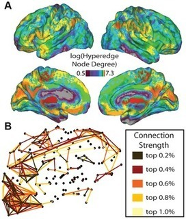 Brain Network Adaptability across Task States | Brain Imaging and Neuroscience: The Good, The Bad, & The Ugly | Scoop.it